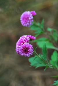 11/14猫さまへの花 - 「あなたに似た花。」