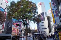 11月15日㈭の109前交差点 - でじたる渋谷NEWS