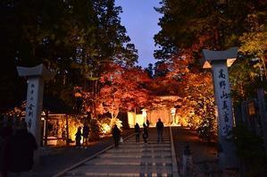 高野山の紅葉 - yukoの花散歩