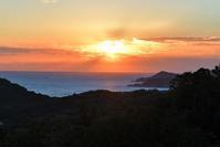 夜明けの海と水族館 - ベジタブルpartⅤ(鳥と共に日々是好日)