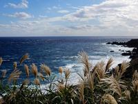 みな、同じように… - 三宅島風景