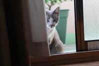 僕のネズミ君(ΦωΦ)‼ - ぎんネコ☆はうす