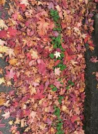 Les feuilles mortes4 - stroll photography