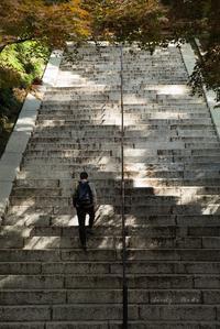 秋の階段♪ - Lovely Poodle