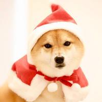 ちょっと早めのクリスマス? - 宮城県富谷市明石台  くさか動物病院ブログ