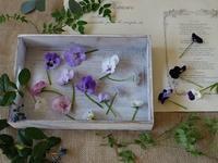 バラとビオラと花遊び - milfle なブーケ