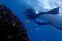 18.11.16ブログ、手抜き気味ですが。。(笑) - 沖縄本島 島んちゅガイドの『ダイビング日誌』