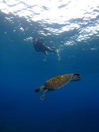スノーケル&スキンダイビングで楽しみました(^^♪ - 八丈島ダイビングサービス カナロアへようこそ!