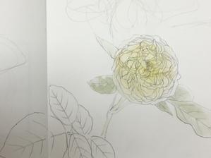 秋薔薇。 - 『一日一畫』 日本画家池上紘子