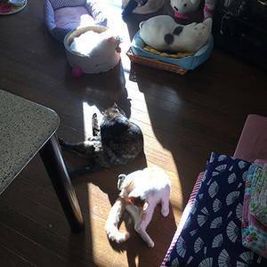 お日様の当たる場所 - ぶつぶつ独り言2(うちの猫ら2018)