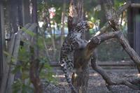 続くカボチャ祭り - 動物園へ行こう