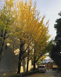 """11月18日(日)は『""""HOSIIRO MARCHE""""』 -  Flower and cafe 花空間 ivory (アイボリー)"""