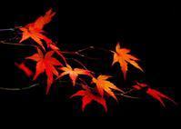 亀岡鍬山神社の紅葉 - 写真を主とした日記です