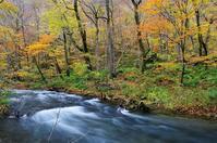 紅葉の奥入瀬渓流-6 - 自然と仲良くなれたらいいな2