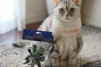100均のクリスマスオーナメントを玄関に。 - Living with Cats*