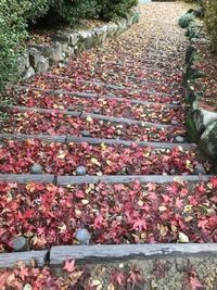 紀尾井坂の階段 - ちょんまげブログ