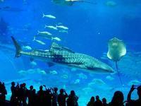 美ら海水族館 - NATURALLY
