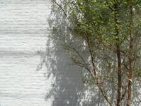 36日目樹を植えようWEB家づくりセミナー - noanoa laboratory