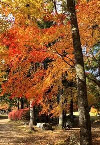 秋も深まり・・・ - 山の布屋