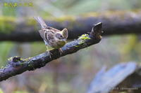 冬鳥Ⅳ号 - 奥武蔵の自然