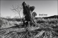 dead tree - すずちゃんのカメラ!かめら!camera!