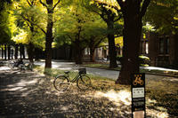 gentle autumn light and shadow #6 - 心のカメラ  〜 more tomorrow than today ...