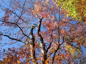 群馬の駅からハイク vol.15:東吾妻町 関東の耶馬渓 吾妻渓谷で紅葉狩り    Agatsuma Valley in Higashiagatsuma, Gunma - やっぱり自然が好き