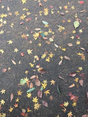 早く京都に行きたい - 秋桜日記