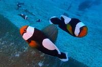 18.11.17北風になって - 沖縄本島 島んちゅガイドの『ダイビング日誌』