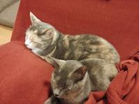 ふたり - 猫に目薬