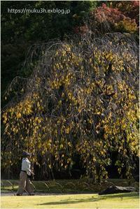 晩秋の枝垂れ - muku3のフォトスケッチ