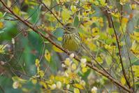 寂しい里山の野鳥たち - 近隣の野鳥を探して