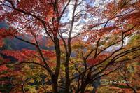 赤い渓谷 - 季節のおくりもの