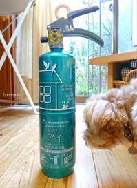 11/17(土)        みかんと消火器♪ - Evergreen. ~常磐に唐草、庭の花~