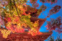 太山寺の紅葉♪ - ぽとすのくずかご