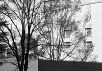 ニレの樹影と朽ちサイロとクラカメで盛り上がった会議前 - 照片画廊