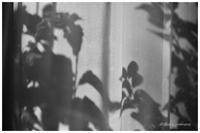 シルエット - BobのCamera