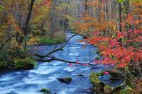 紅葉の奥入瀬渓流-7 - 自然と仲良くなれたらいいな2
