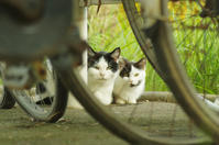 Happy Caturday -お母にゃんといっしょ♪- - It's only photo 2