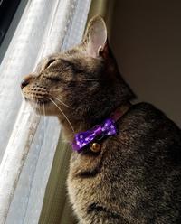 晴れ間が出てきた - キジトラ猫のトラちゃんダイアリー