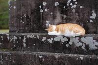 お寺の番猫さん - aya's photo