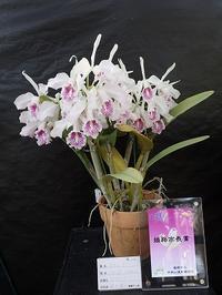 「秋の洋ラン展」開催! - 手柄山温室植物園ブログ 『山の上から花だより』