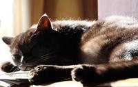 眠ちゃんとホロ - ぎんネコ☆はうす