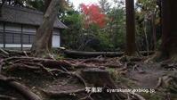 法然院・真如堂の台風跡 - 写楽彩