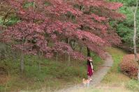 生田緑地 - ルンコたんとワタシの心模様