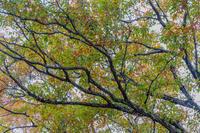 二本木峠の紅葉 - デジカメ写真集