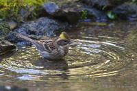 晩秋浴 - 奥武蔵の自然