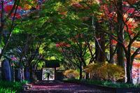 金蔵院で紅葉(1) - 『私のデジタル写真眼』