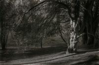イチイの木が微笑むとき - No Man's Land
