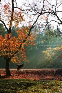 Late in autumn - for  someone